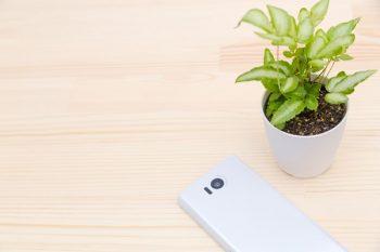 携帯と植物